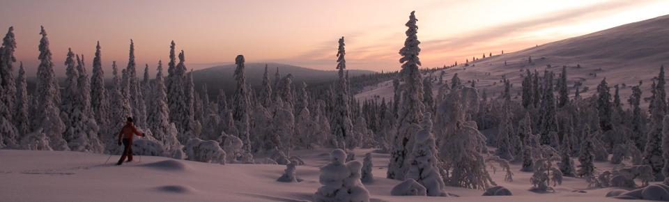 ... Ski Tour in Pallas-Yllästunturi National Park - Feel The Nature