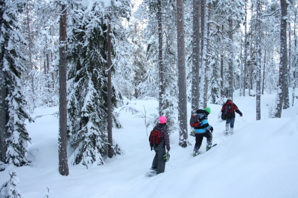 Winter and snowshoe hiking in Nuuksio National Park