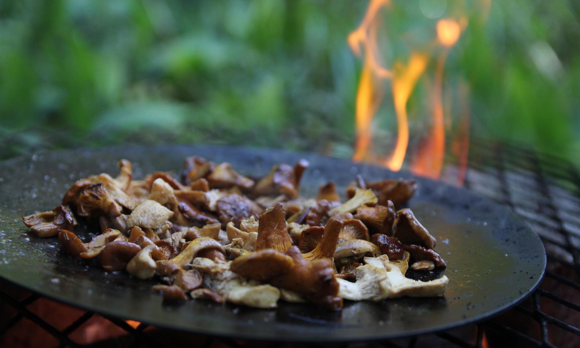 Mushroom picking in Nuuksio National Park
