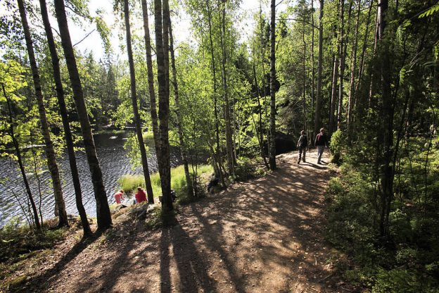 Glimpse of Finnish Nature - hiking in forest
