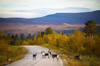 How to get to Rauhala in West-Lapland