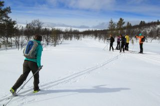Aloittelijan hiihtoviikko Tunturi-Lapissa