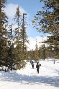 Skiing in Pallas-Yllästunturi National Park, foto: Feel The Nature