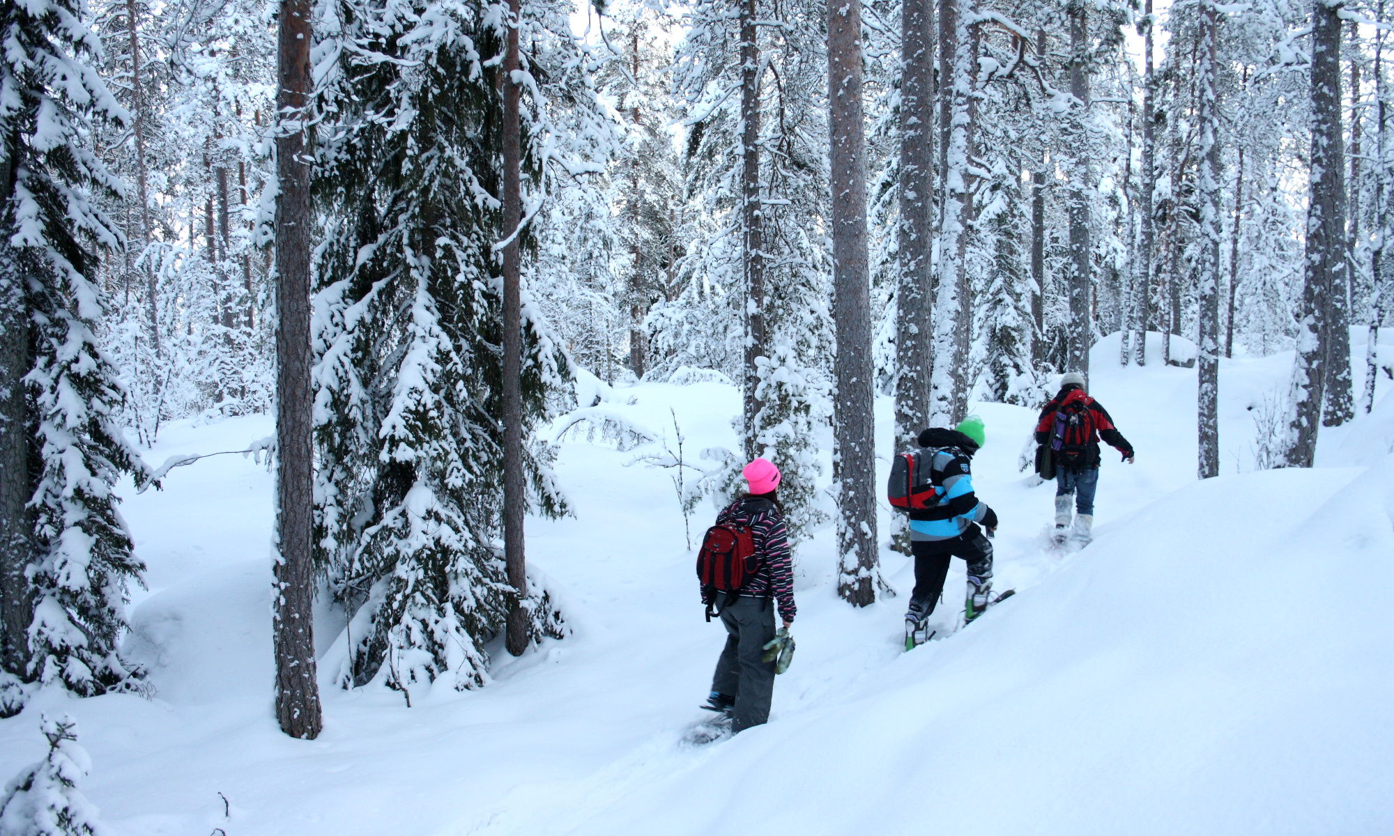 Winter Hiking in Nuuksio National Park near Helsinki