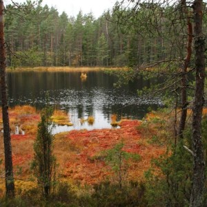 Autumn colours in Nuuksio