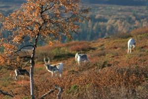 autumn 2010 020
