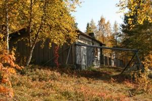 autumn 2010 056